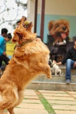 To Visit Pet-Friendly Cafes in Bengaluru
